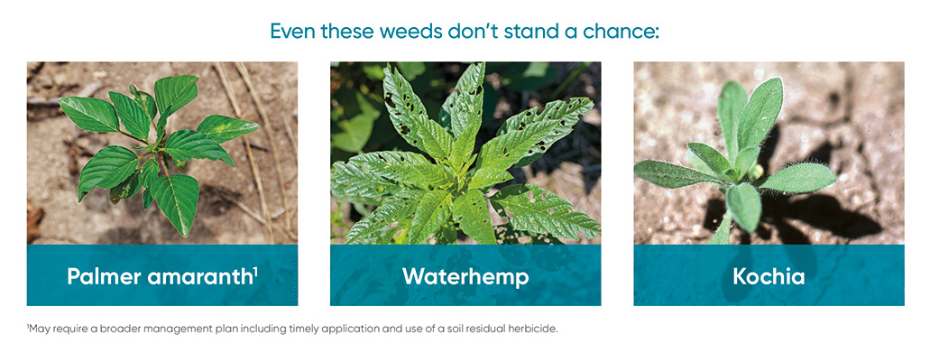 Liberty herbicide - weeds controlled